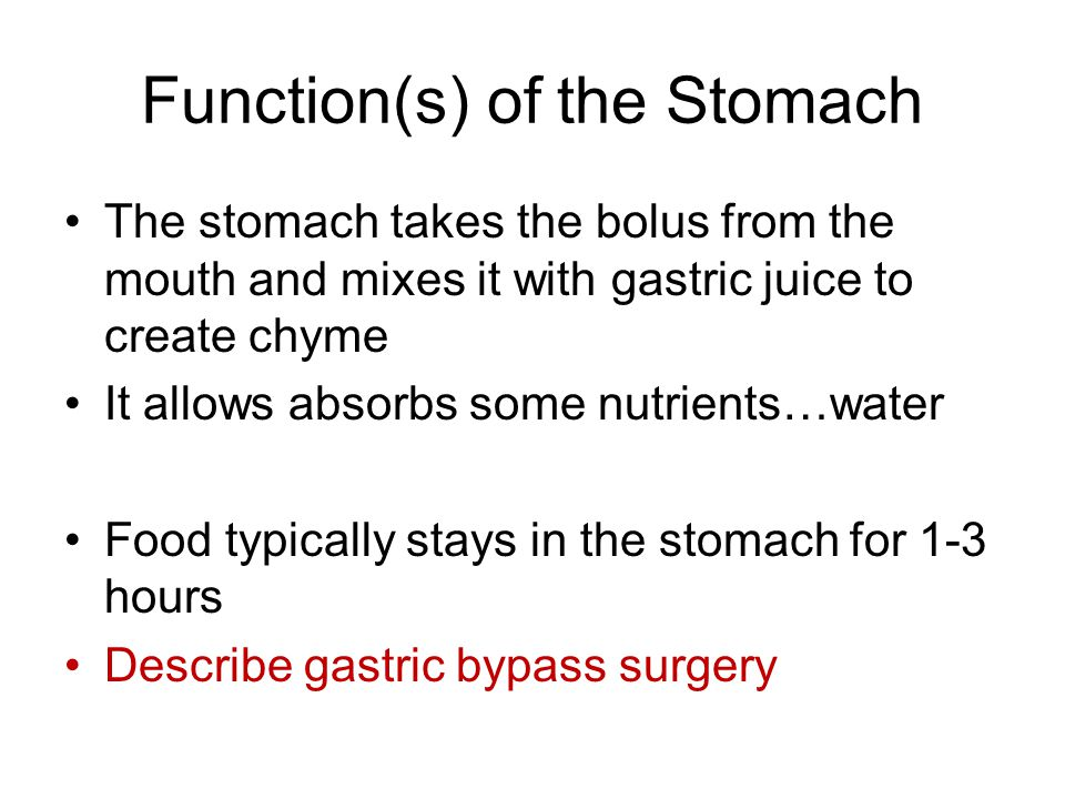 Function(s) of the Stomach
