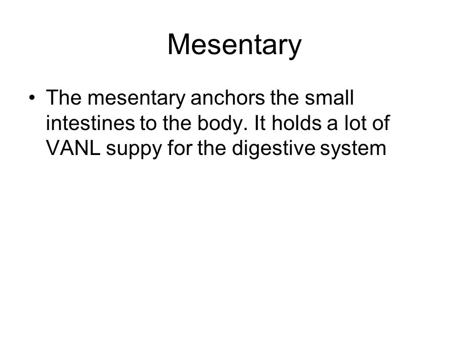 Mesentary The mesentary anchors the small intestines to the body.