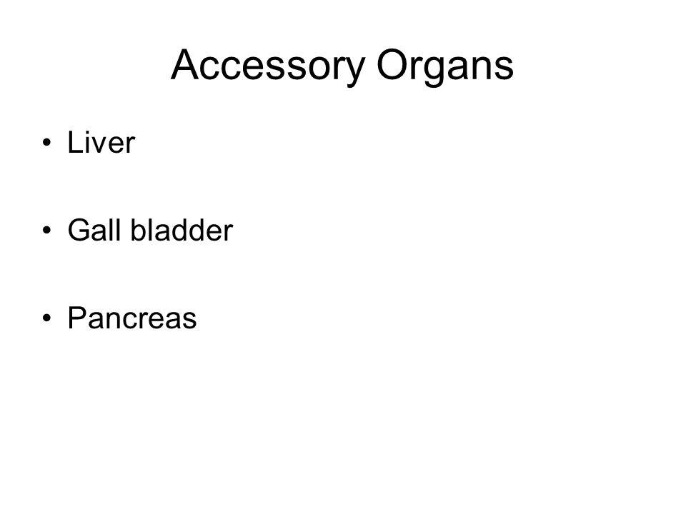 Accessory Organs Liver Gall bladder Pancreas