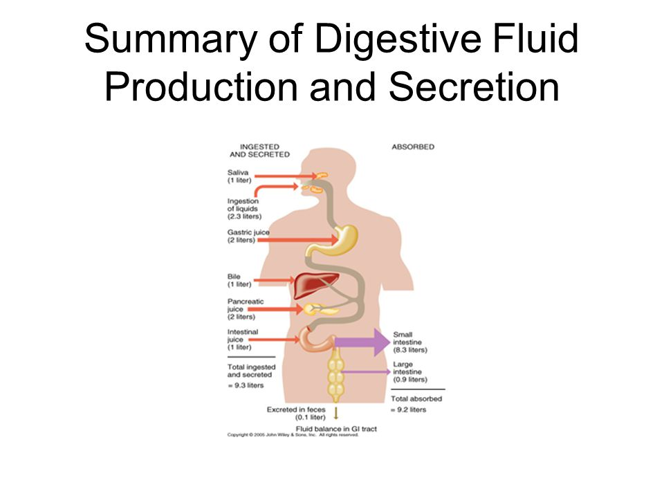 Summary of Digestive Fluid Production and Secretion