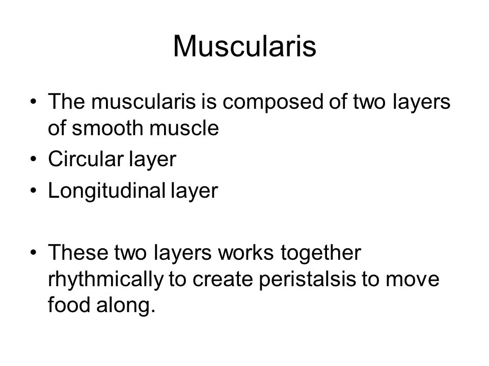 Muscularis The muscularis is composed of two layers of smooth muscle