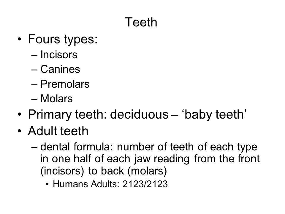 Primary teeth: deciduous – 'baby teeth' Adult teeth