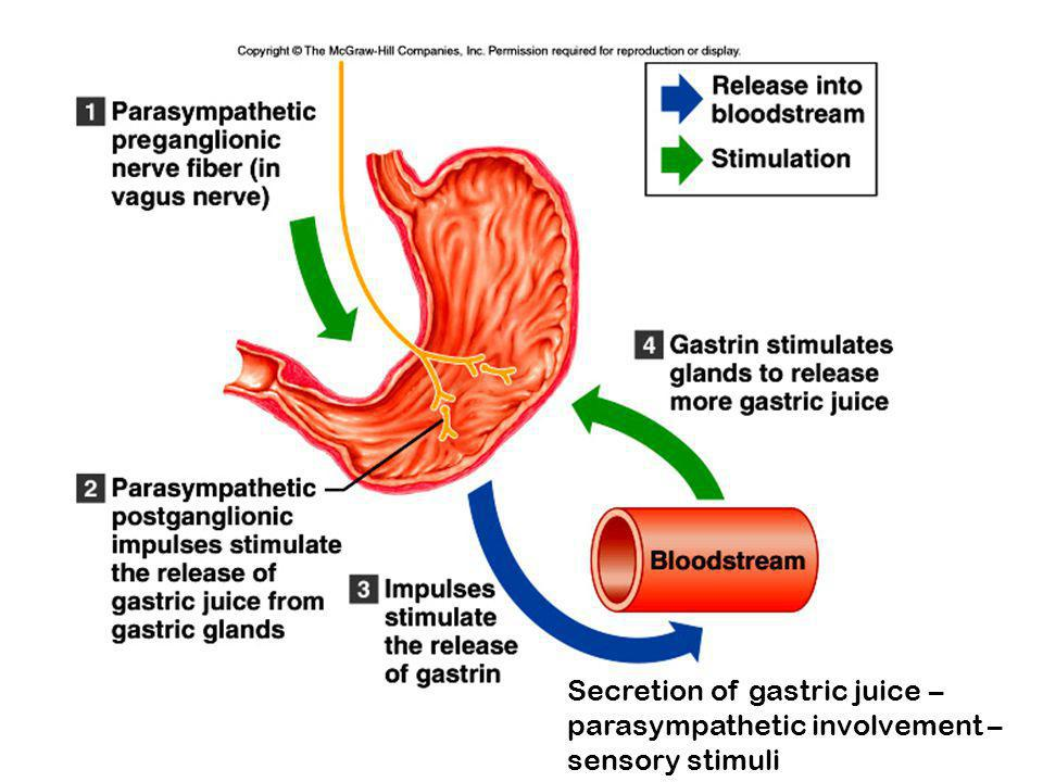 Secretion of gastric juice – parasympathetic involvement – sensory stimuli