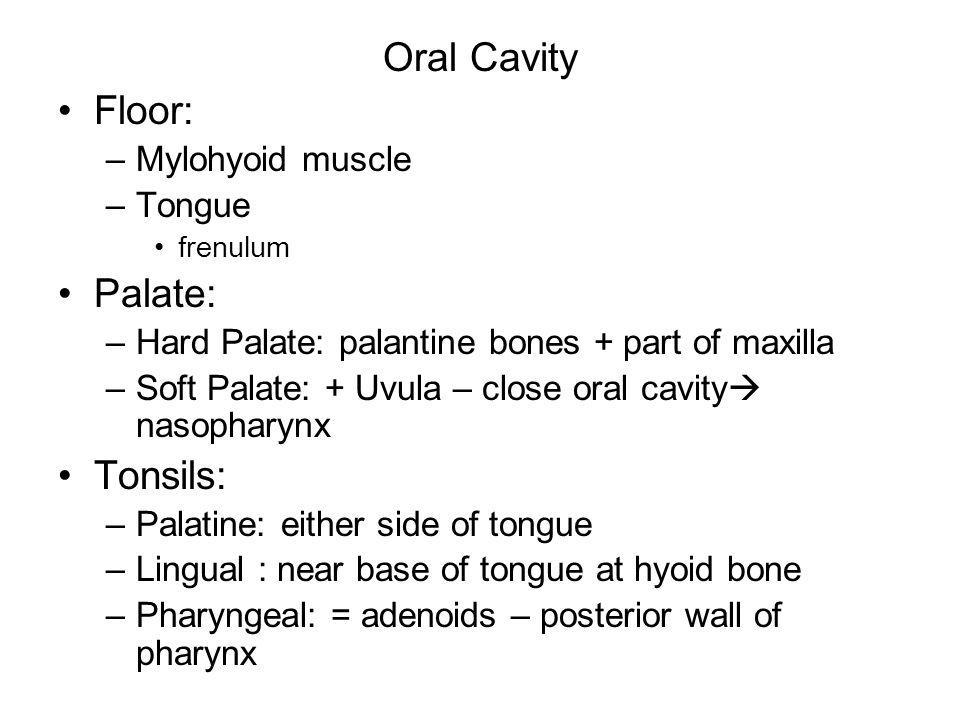 Oral Cavity Floor: Palate: Tonsils: Mylohyoid muscle Tongue