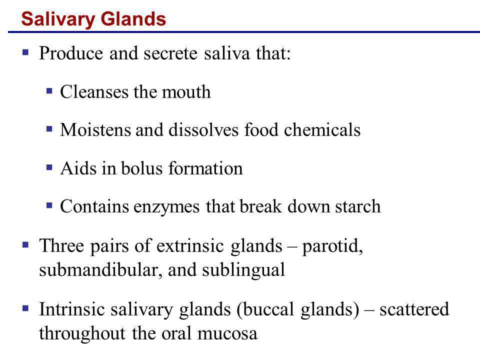 Produce and secrete saliva that: