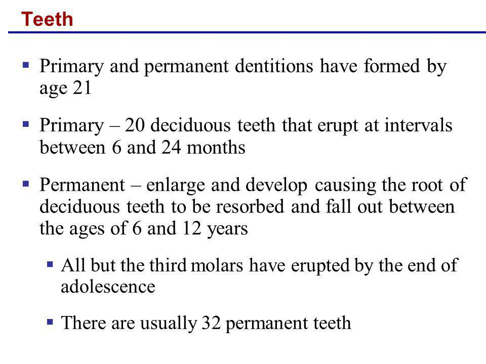 Primary and permanent dentitions have formed by age 21