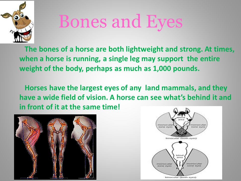 Bones and Eyes