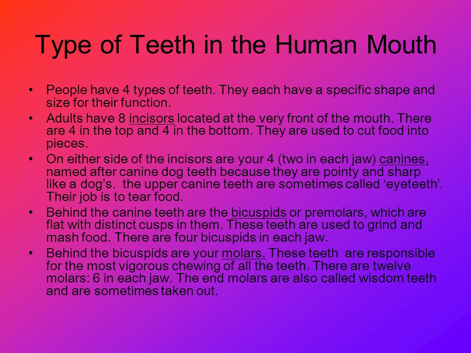 Type of Teeth in the Human Mouth