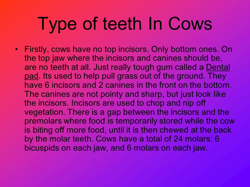 Type of teeth In Cows