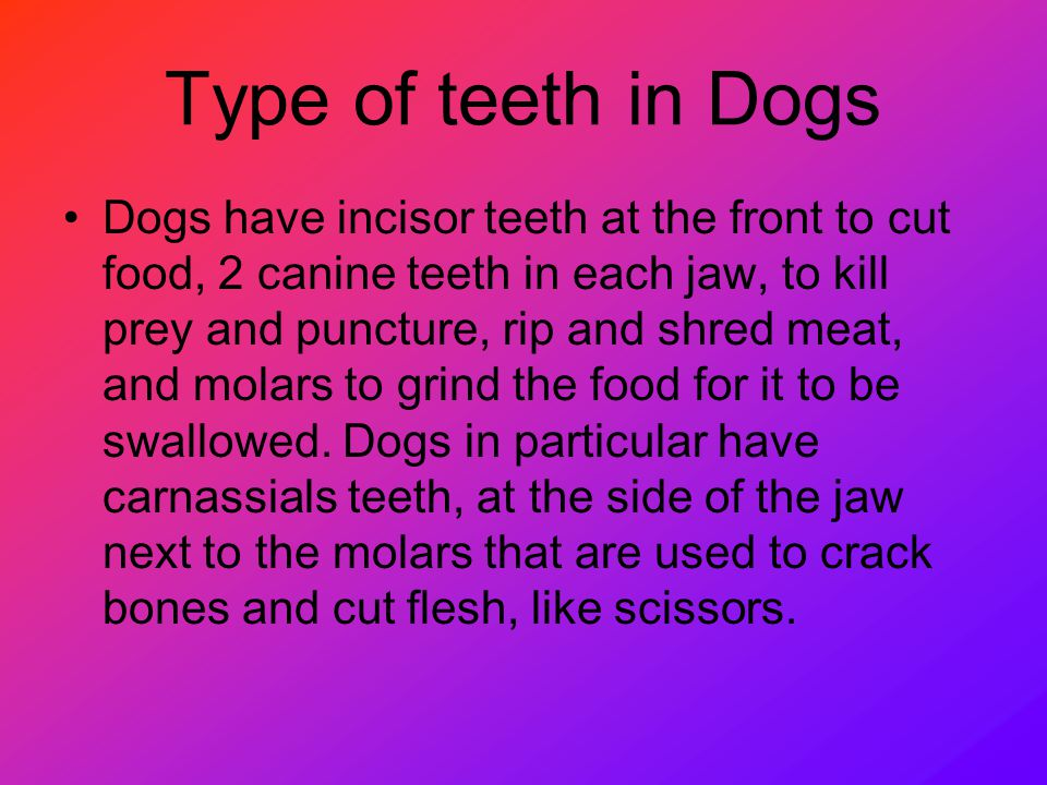 Type of teeth in Dogs