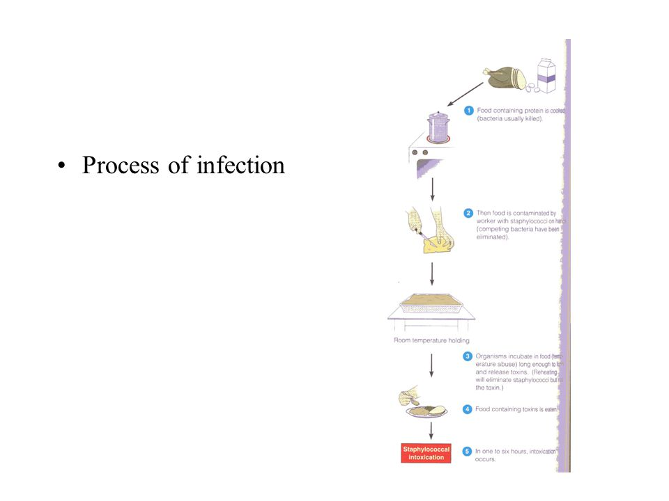Process of infection