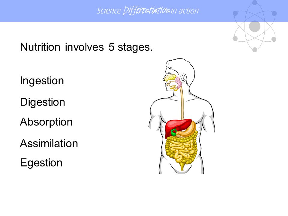 Nutrition involves 5 stages.