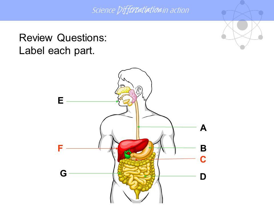 Review Questions: Label each part. E A F B C G D