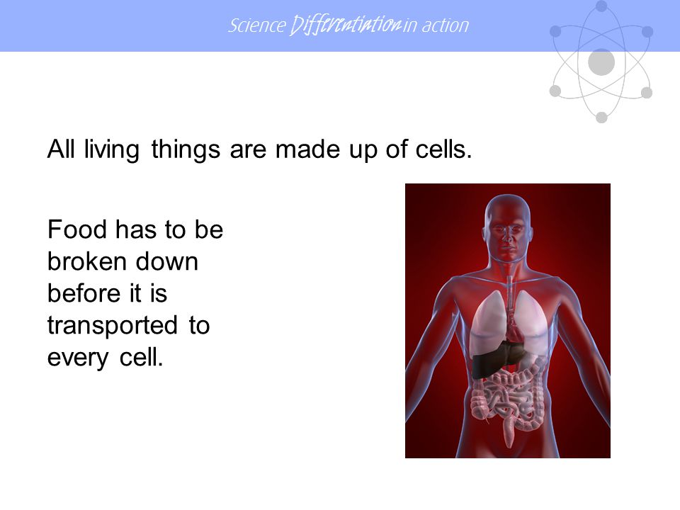 All living things are made up of cells.