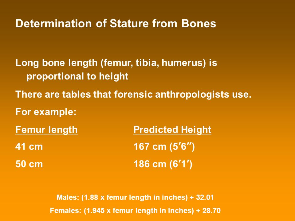 Determination of Stature from Bones