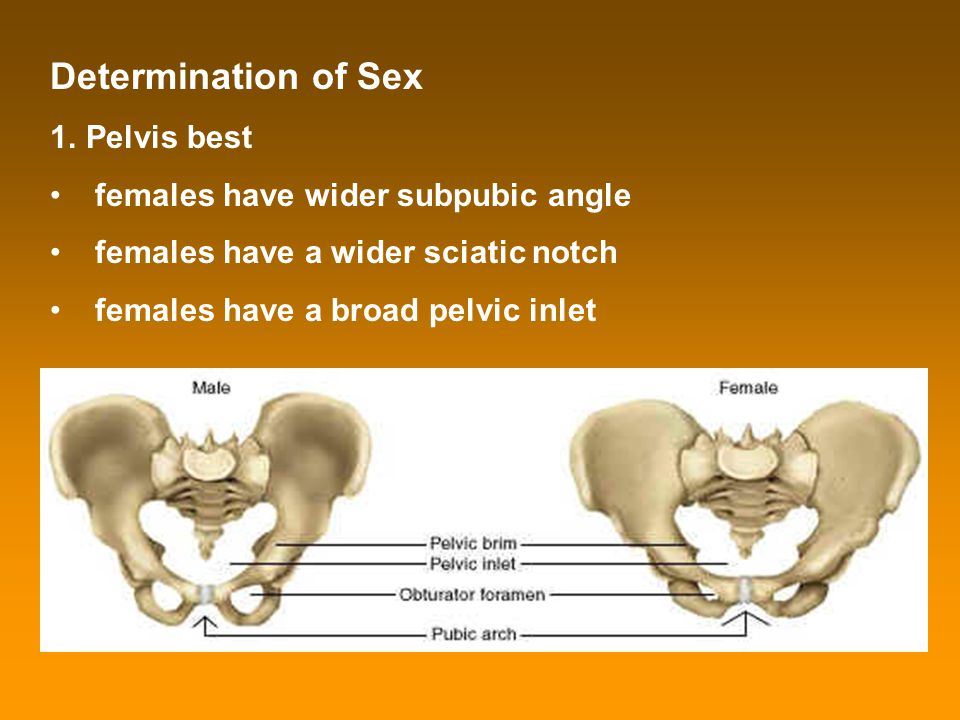 Determination of Sex Pelvis best females have wider subpubic angle