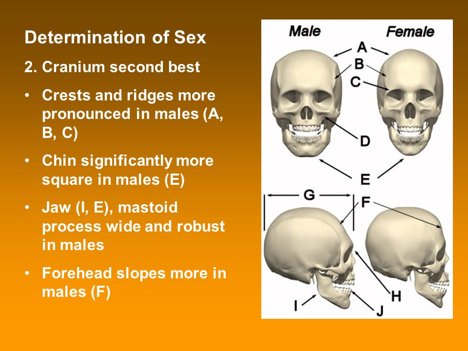 Determination of Sex Cranium second best