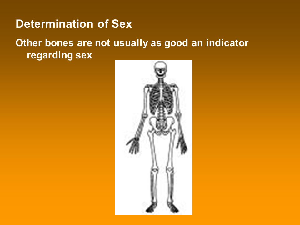 Determination of Sex Other bones are not usually as good an indicator regarding sex