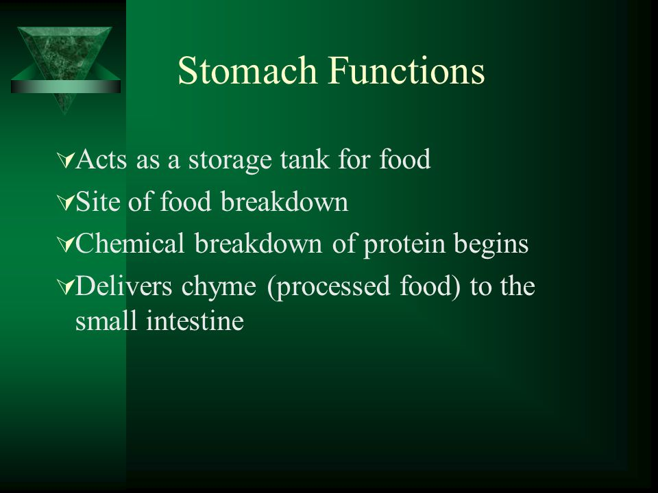 Stomach Functions Acts as a storage tank for food