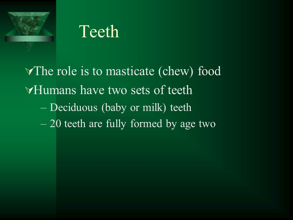 Teeth The role is to masticate (chew) food