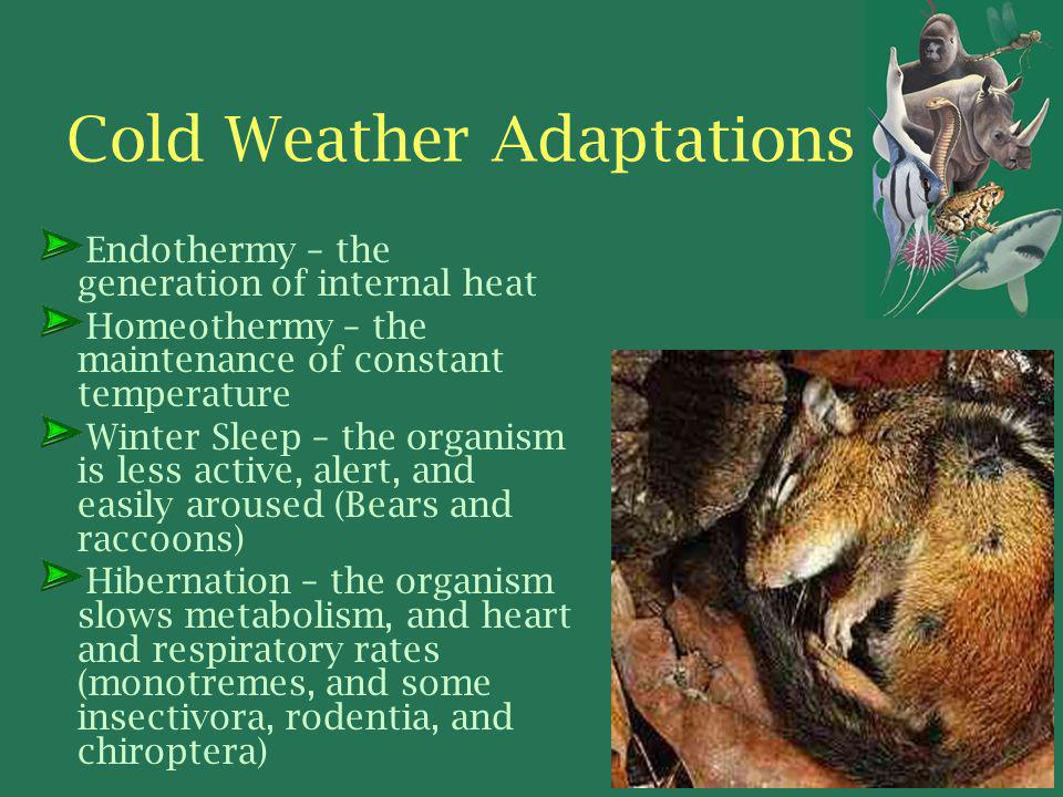 Cold Weather Adaptations