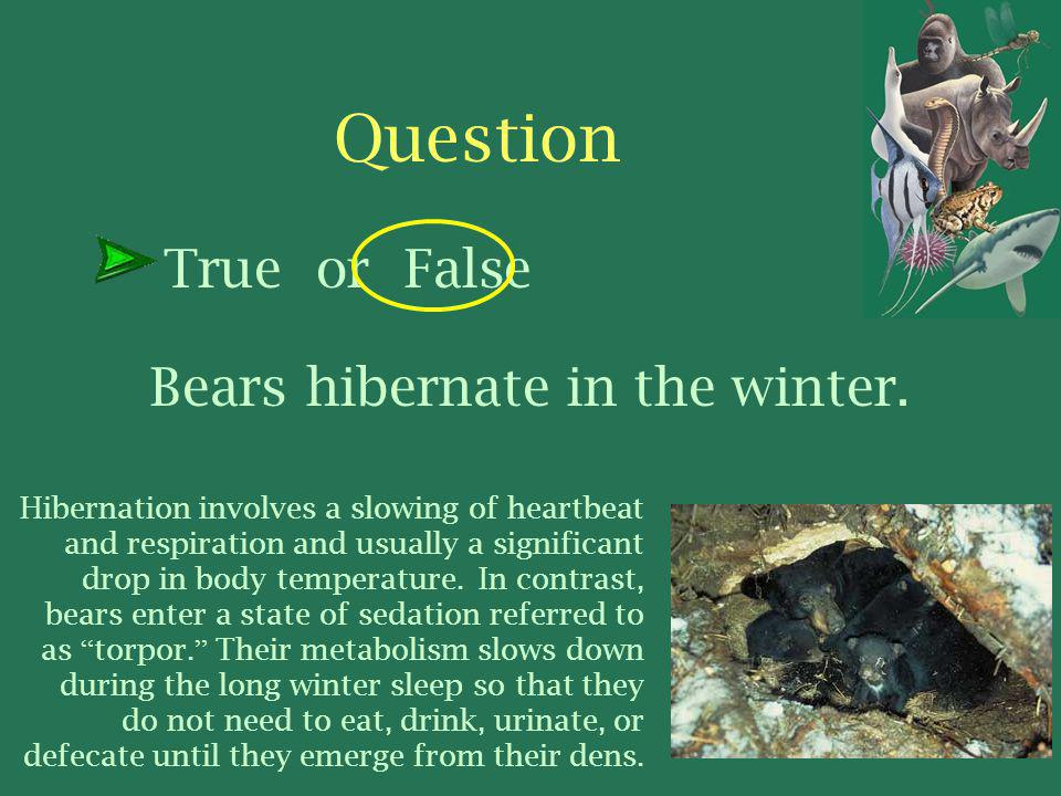 Bears hibernate in the winter.