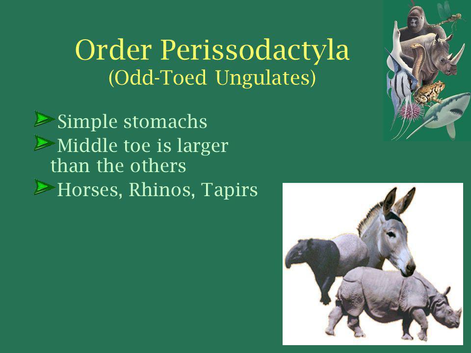 Order Perissodactyla (Odd-Toed Ungulates)