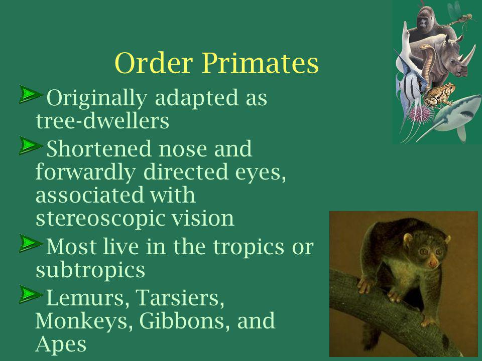 Order Primates Originally adapted as tree-dwellers