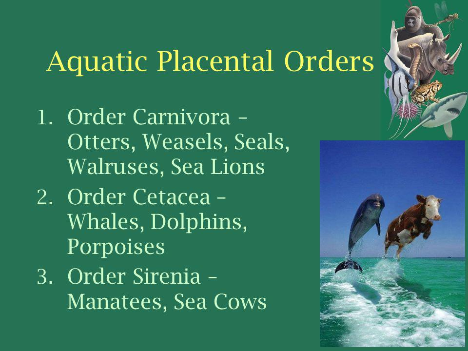 Aquatic Placental Orders