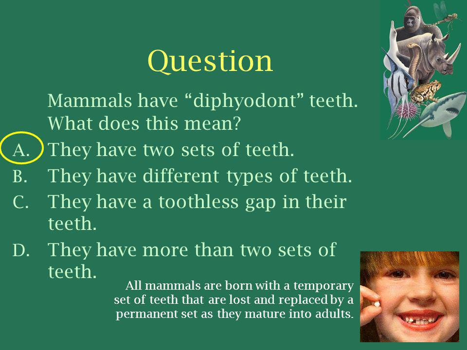 Question Mammals have diphyodont teeth. What does this mean
