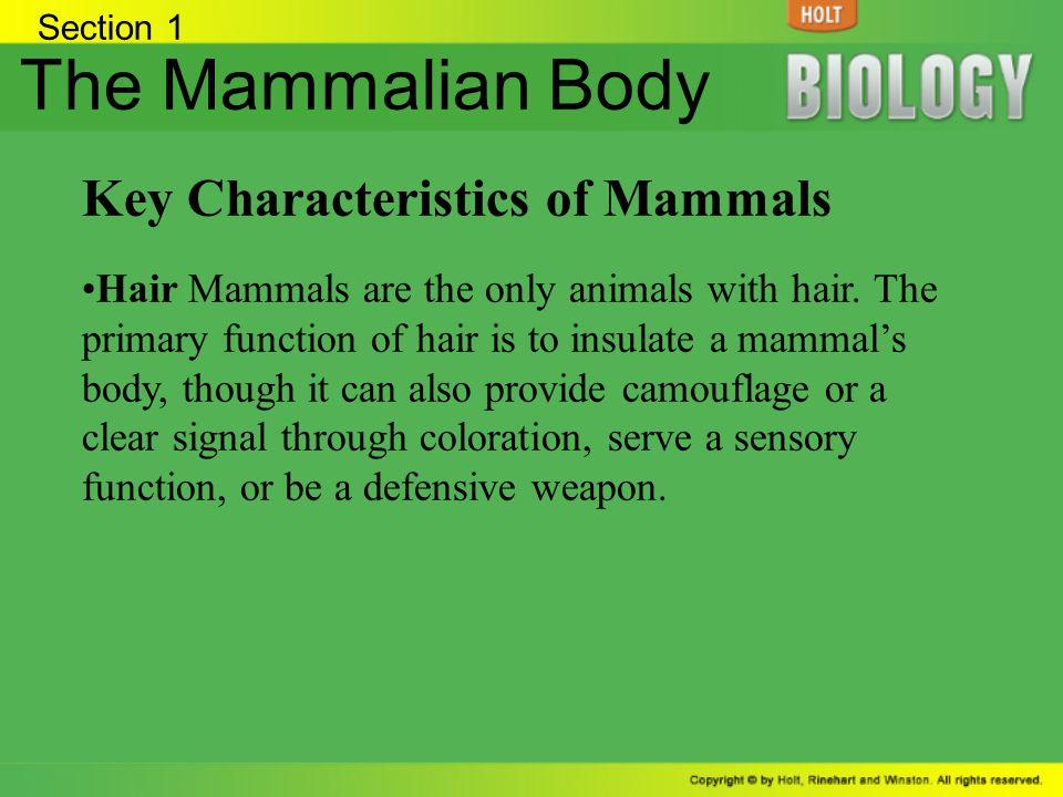 The Mammalian Body Key Characteristics of Mammals
