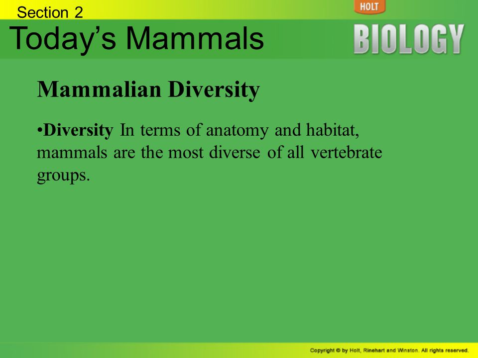 Today's Mammals Mammalian Diversity