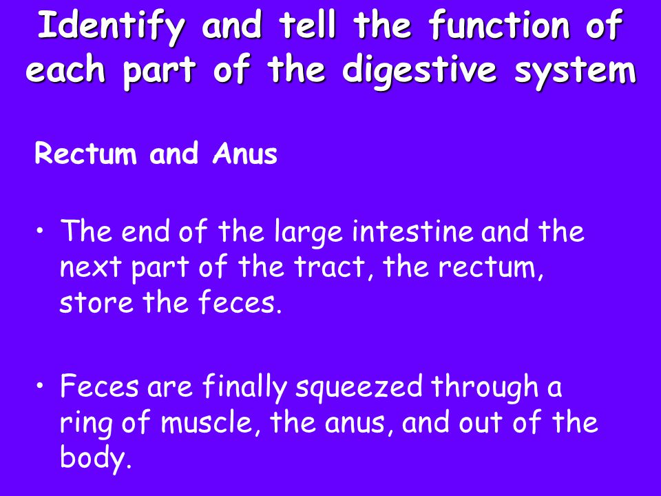 Identify and tell the function of each part of the digestive system
