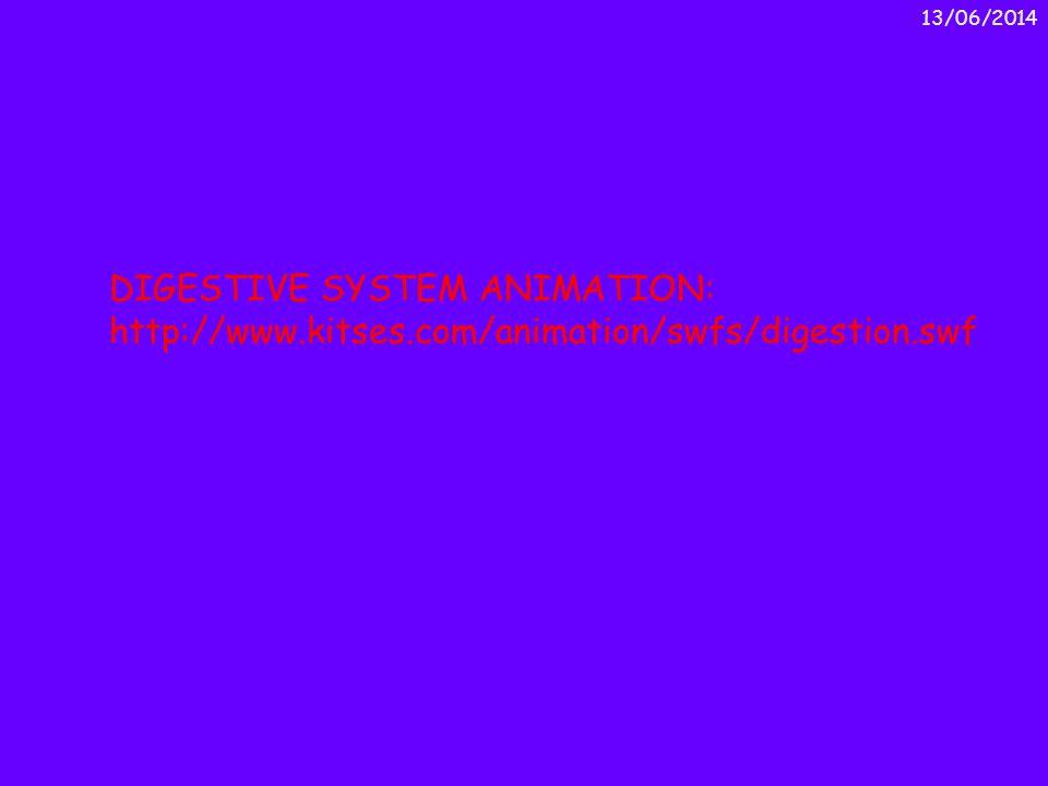 01/04/2017 DIGESTIVE SYSTEM ANIMATION: http://www.kitses.com/animation/swfs/digestion.swf