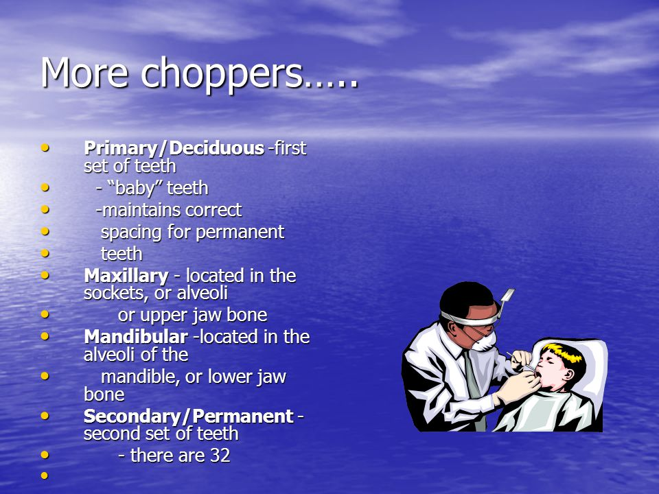 More choppers….. Primary/Deciduous -first set of teeth - baby teeth