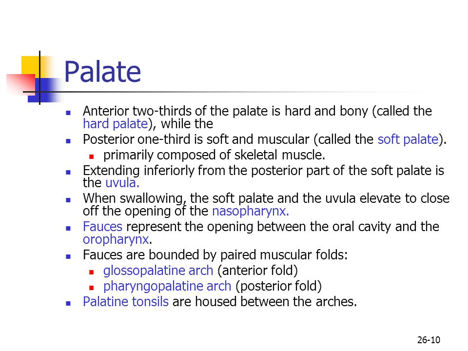 Palate Anterior two-thirds of the palate is hard and bony (called the hard palate), while the.