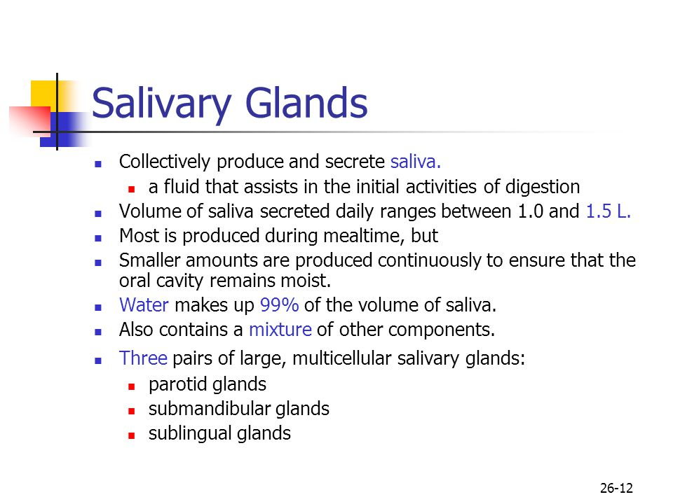 Salivary Glands Collectively produce and secrete saliva.