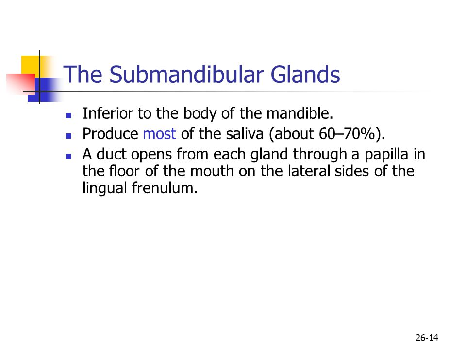 The Submandibular Glands