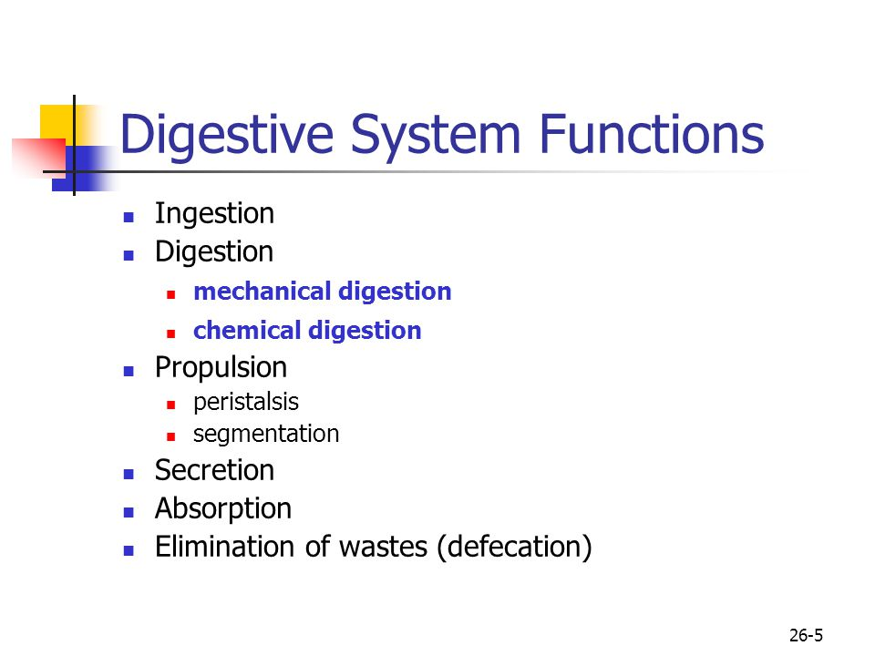 Digestive System Functions