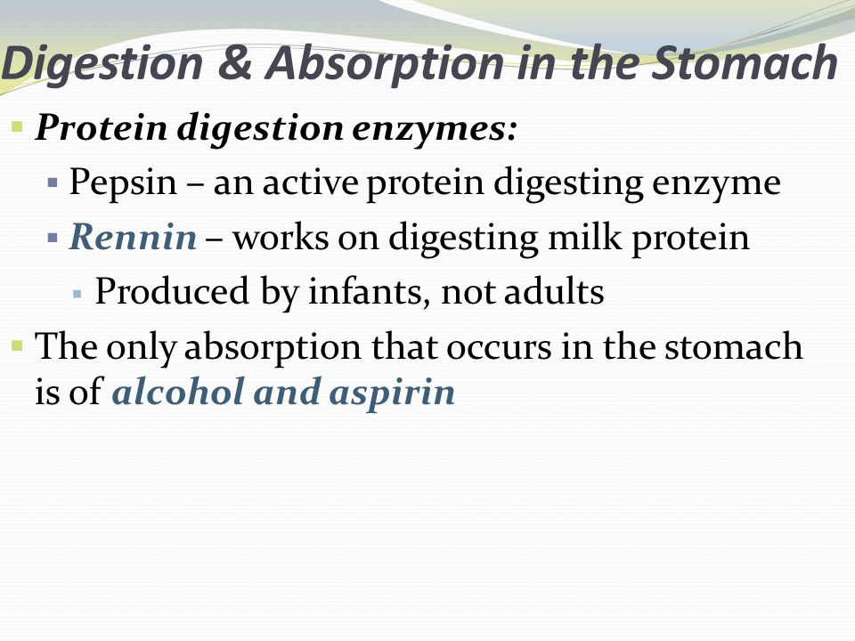 Digestion & Absorption in the Stomach