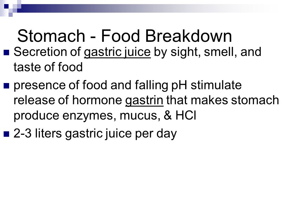 Stomach - Food Breakdown