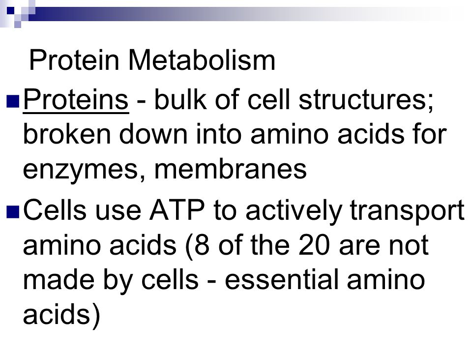 Protein Metabolism Proteins - bulk of cell structures; broken down into amino acids for enzymes, membranes.