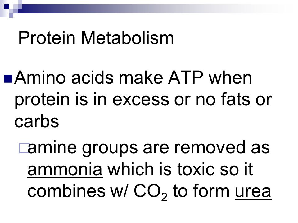 Protein Metabolism Amino acids make ATP when protein is in excess or no fats or carbs.