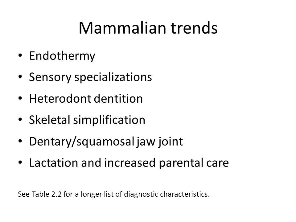 Mammalian trends Endothermy Sensory specializations