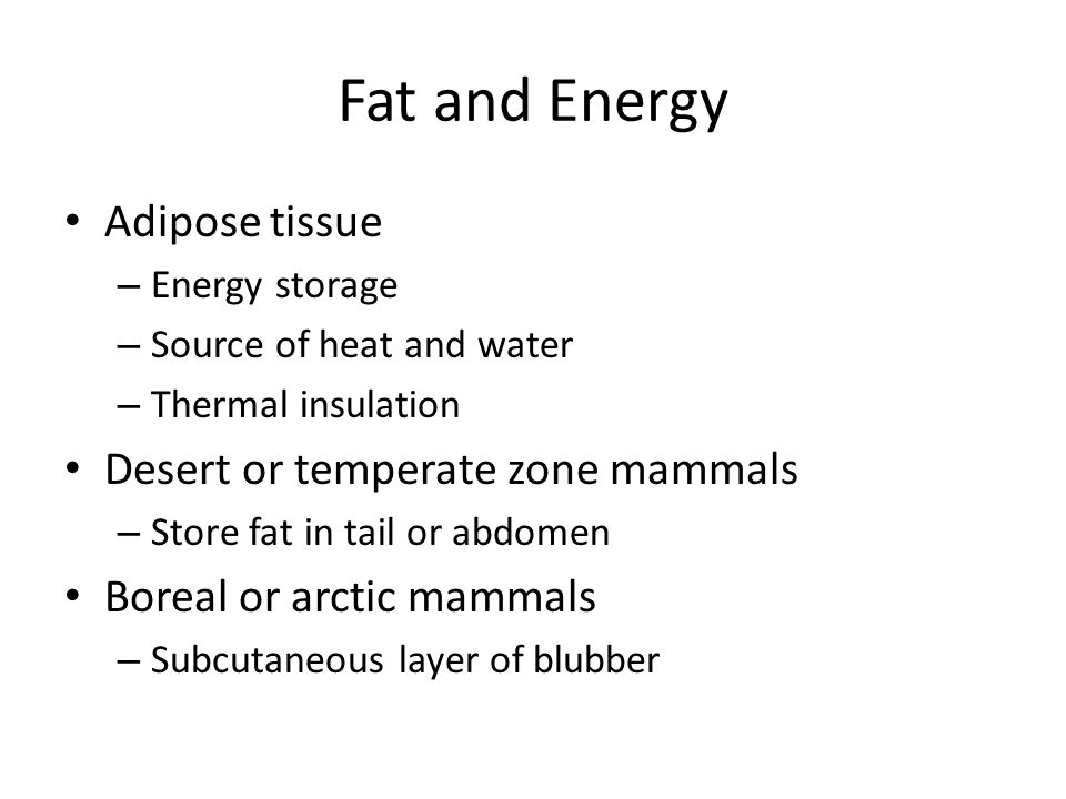 Fat and Energy Adipose tissue Desert or temperate zone mammals