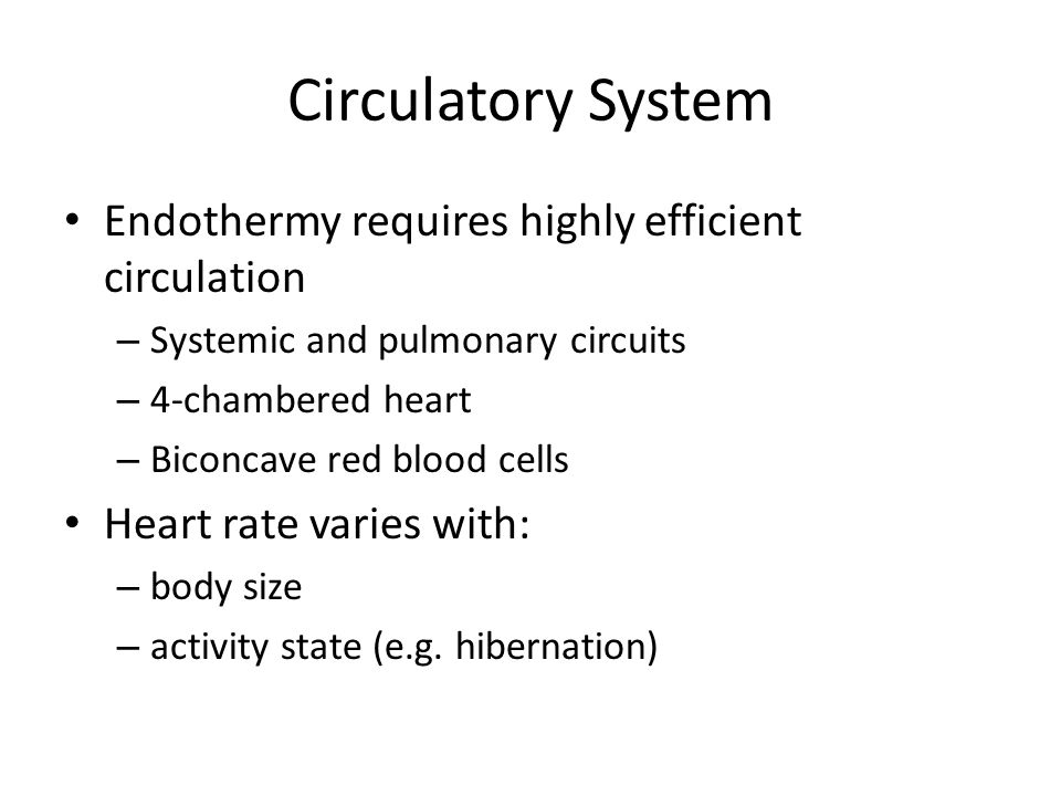 Circulatory System Endothermy requires highly efficient circulation