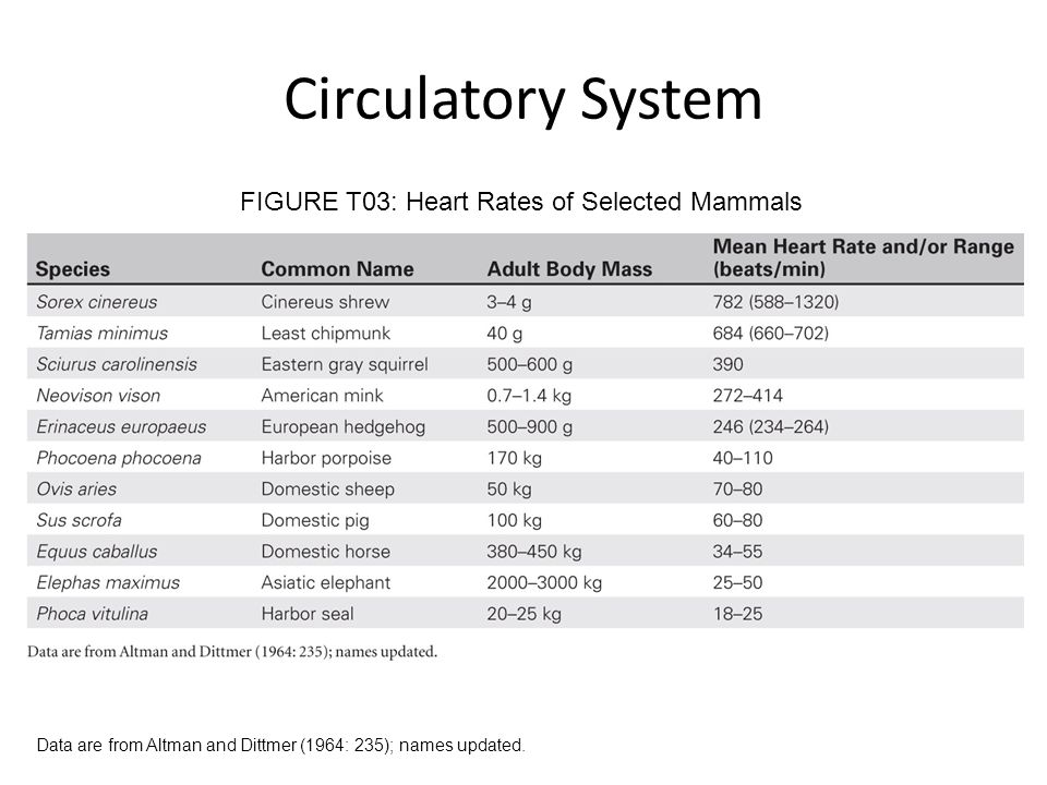 FIGURE T03: Heart Rates of Selected Mammals