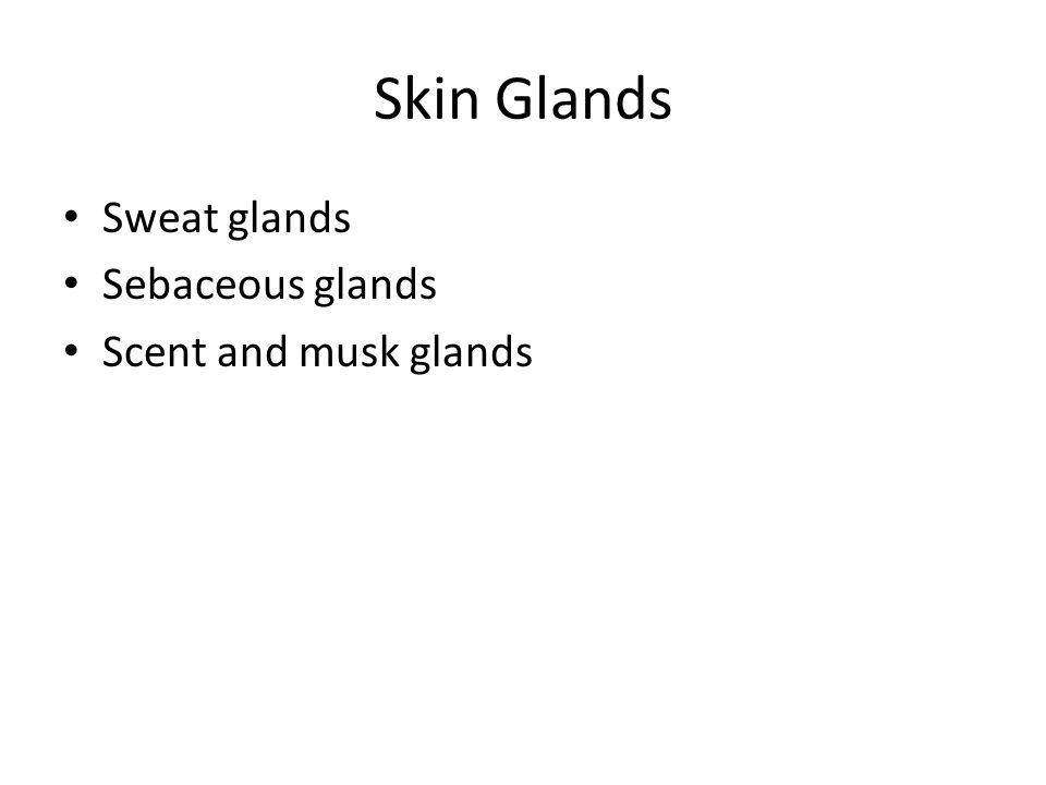 Skin Glands Sweat glands Sebaceous glands Scent and musk glands