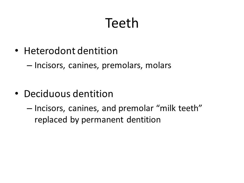 Teeth Heterodont dentition Deciduous dentition