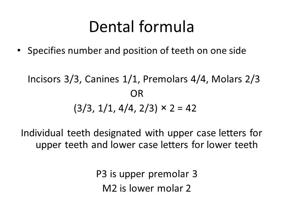 Dental formula OR (3/3, 1/1, 4/4, 2/3) × 2 = 42